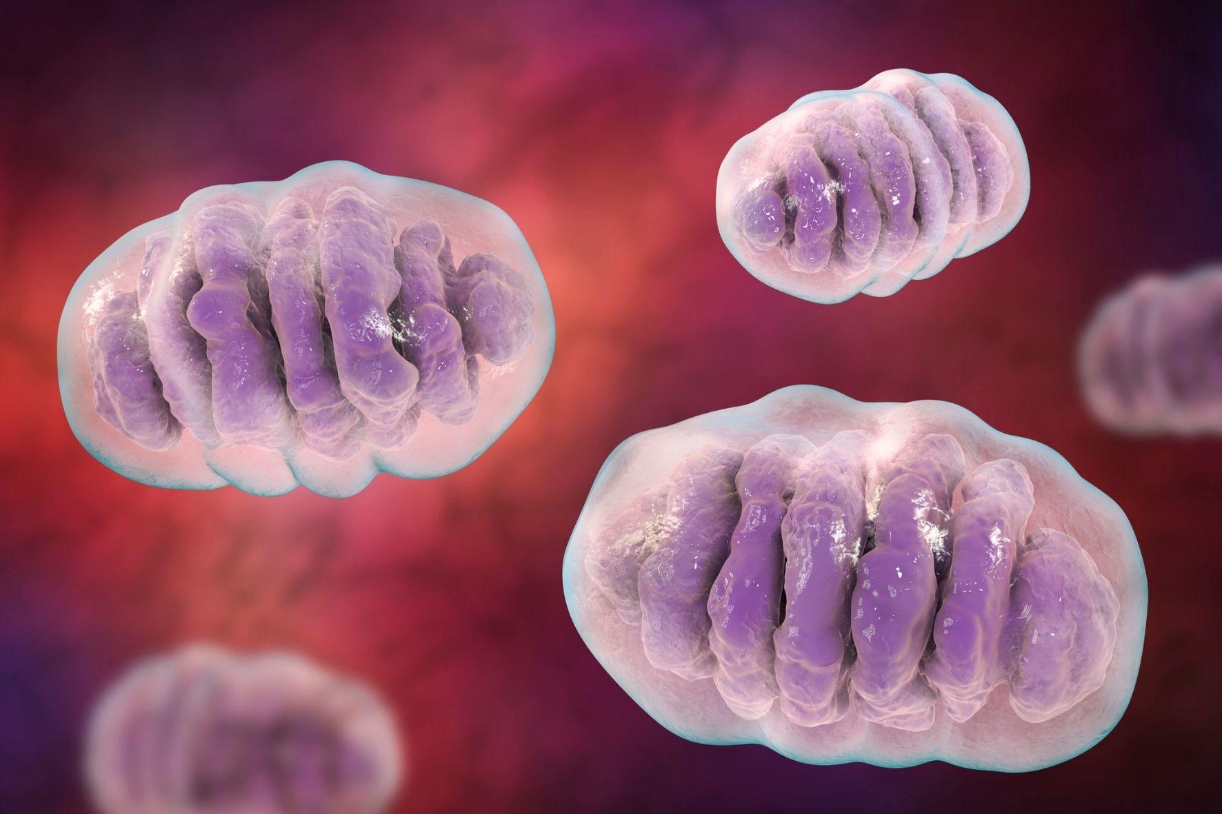 ミトコンドリアDNAが身長の高さや糖尿病の発病率などに関連してると判明!