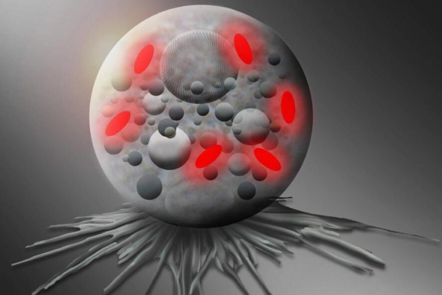 ポケモンのようにボールの中で暮らす「ポケモナス」というバクテリアの存在が明らかに