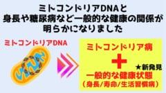 ミトコンドリアDNAは一般的な疾患に大きくかかわっていると判明