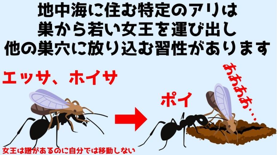 女王は翅もあり飛べるはずなのに輸送は働きアリにまかせている
