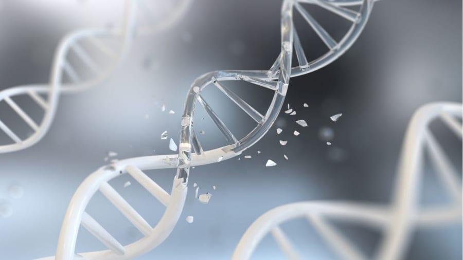 老化の原因は結局は全てDNAにエラーが蓄積すること