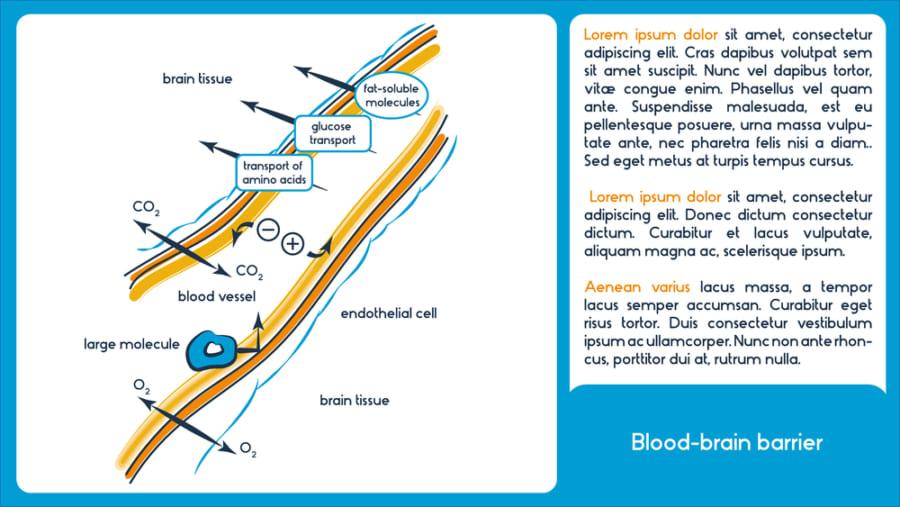 血液脳関門の働き