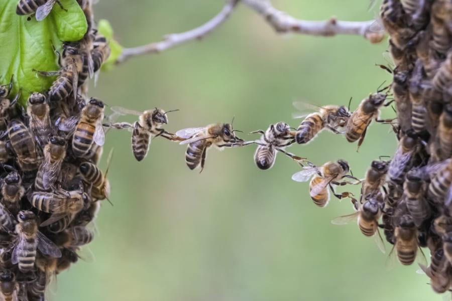 衝撃!2匹のハチが協力プレイで「ペットボトルのフタ」を回して開ける瞬間を撮影
