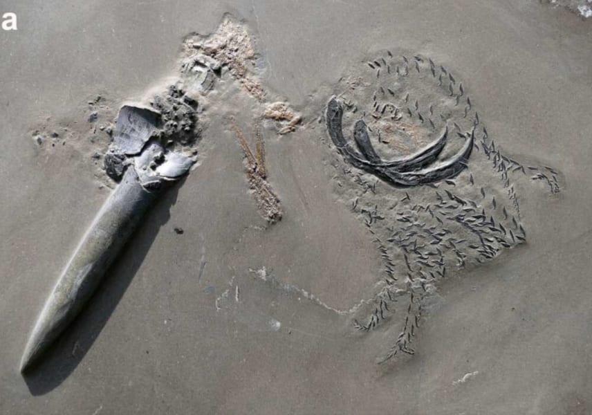 今回調査された化石