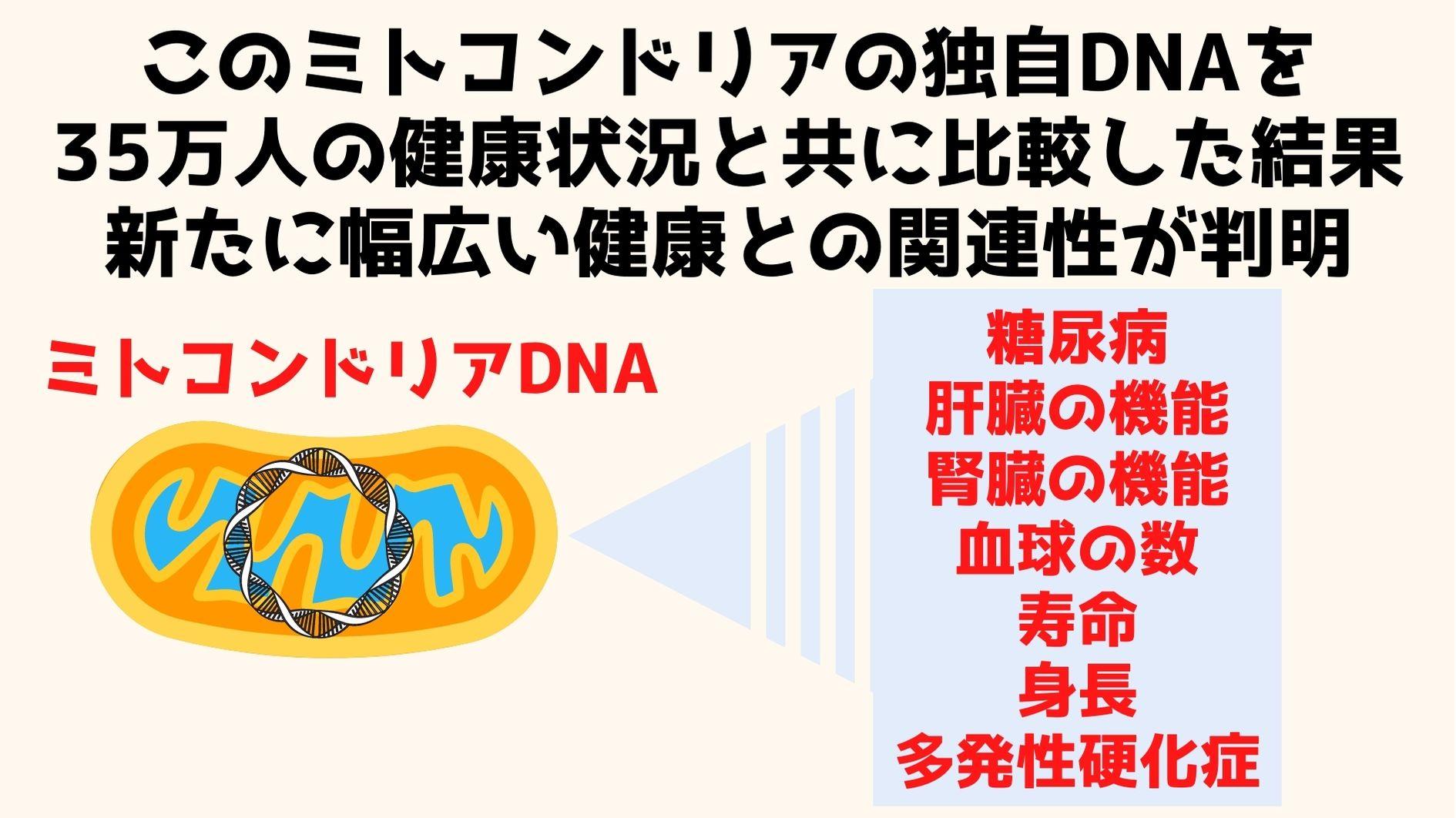 ミトコンドリアDNAは核DNAだけがかかわると考えられて来た要因に影響を与える