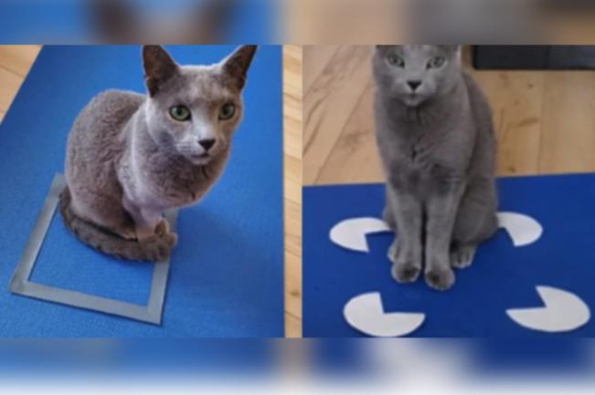 「ネコホイホイ現象」はネコの錯覚によっても起きる! 市民の協力で解明