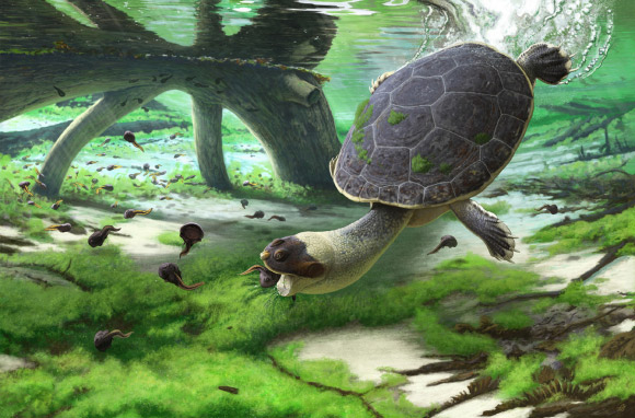 新種の古代ガメを発見(イメージ画)
