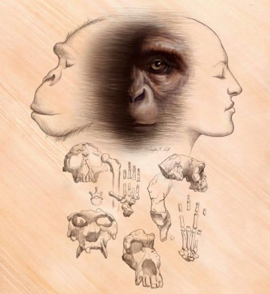 意見の一致した「人類の進化」のストーリーはない?