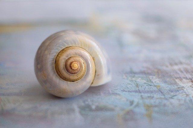 「カタツムリの殻」ってどうやって作られているの? 梅雨時期に出没が多い理由は?