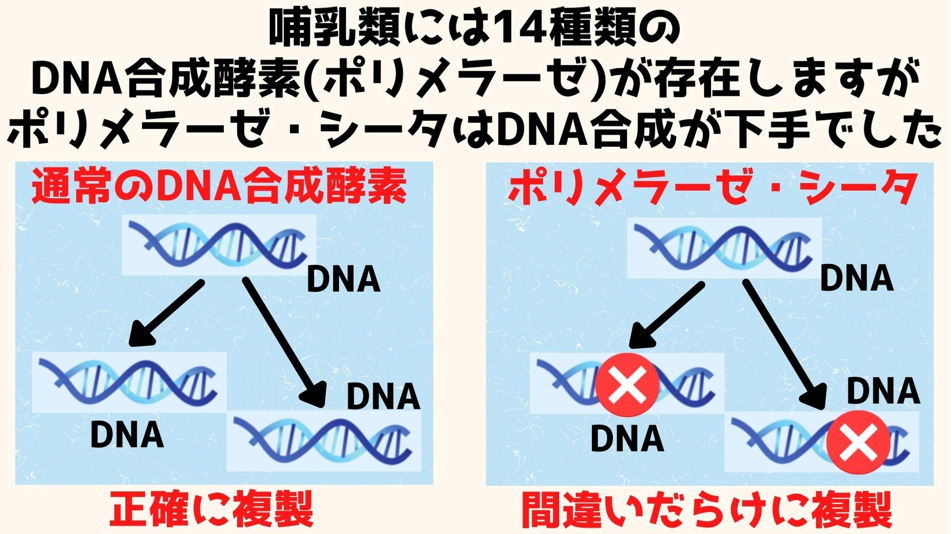 ポリメラーゼ・シータはDNA合成の劣等生だった