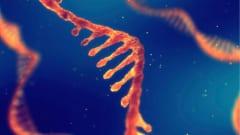 人間の細胞にもRNA配列を元にDNAを修復する能力が備わっている可能性がある