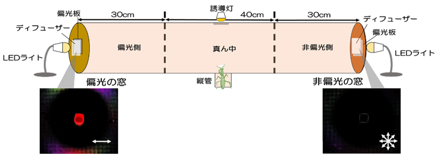 光選択の実験装置