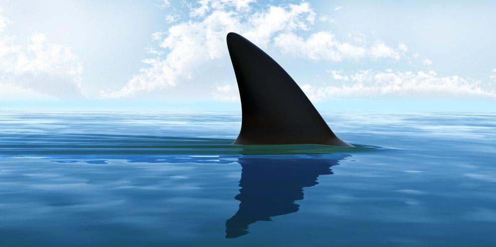 サメの休息法が判明