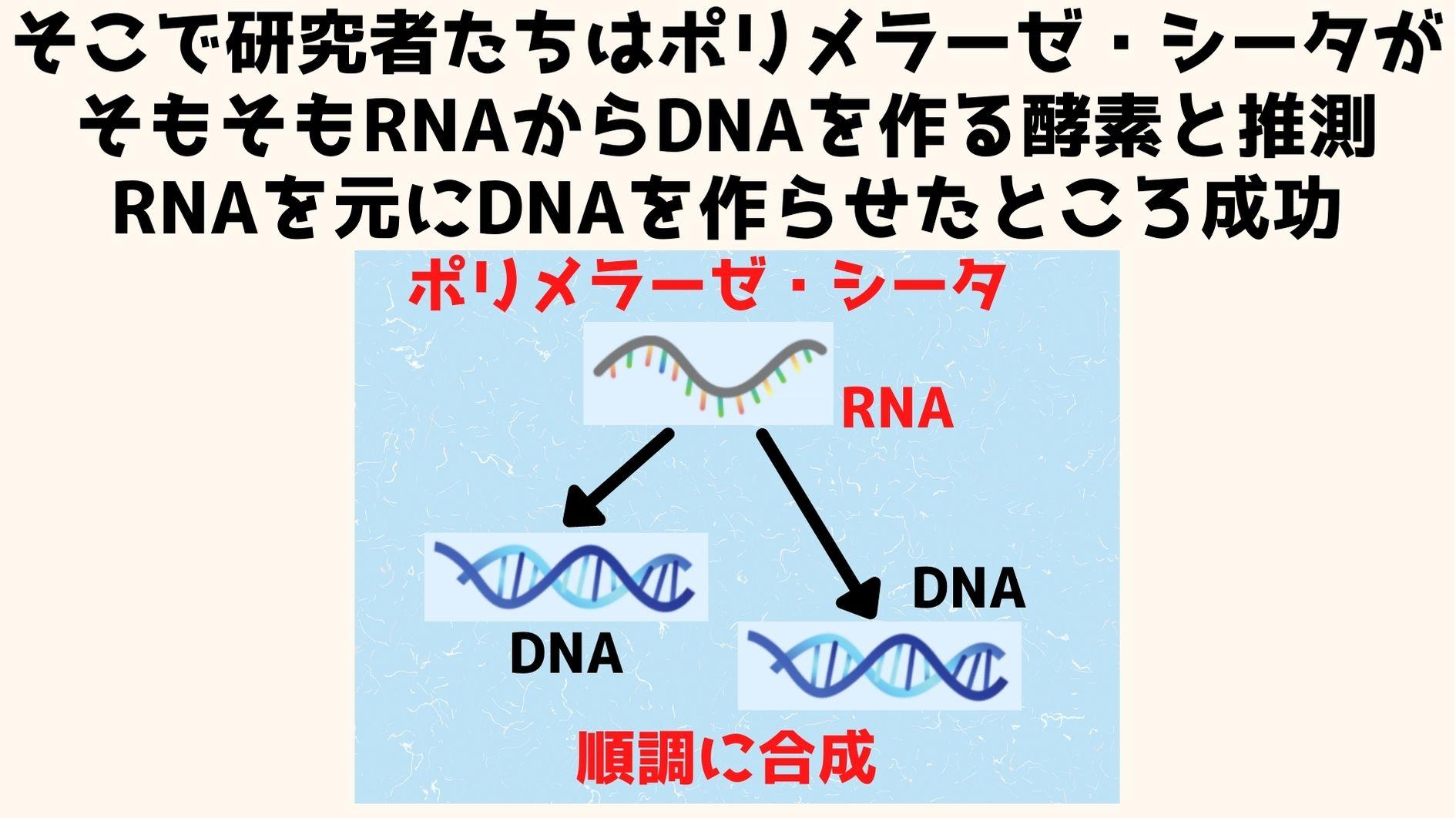 そもそもポリメラーゼ・シータ派DNAからDNAを作る酵素ではなくRNAからDNAを作る酵素だった