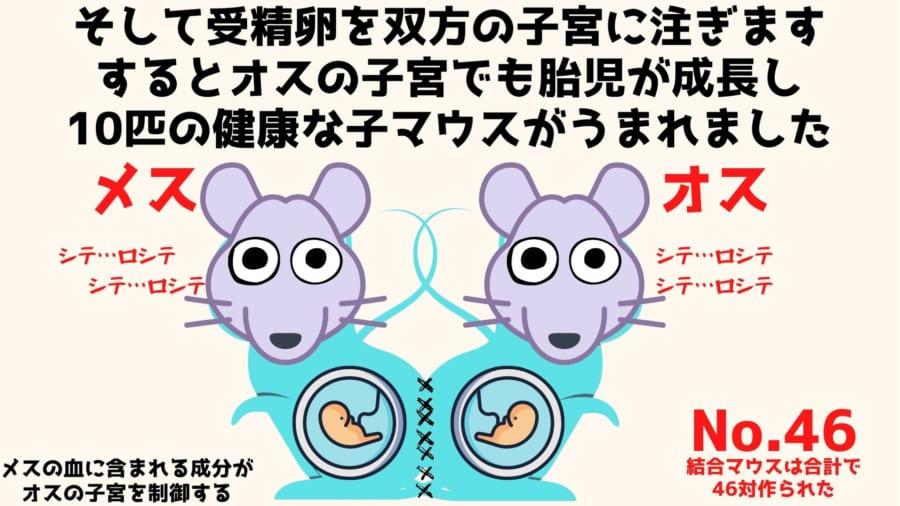 健康な子マウスがうまれる確率はメスマウスからのほうが多かった