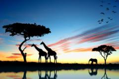 大型哺乳類がアフリカへ大移動?