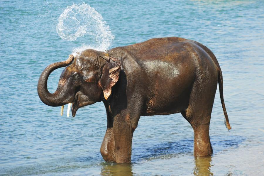水4Lを1.5秒で飲み干す!ゾウの鼻の吸引スピードは「時速540キロ」に達すると判明