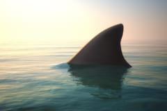 どうやってサメに襲われたのか?