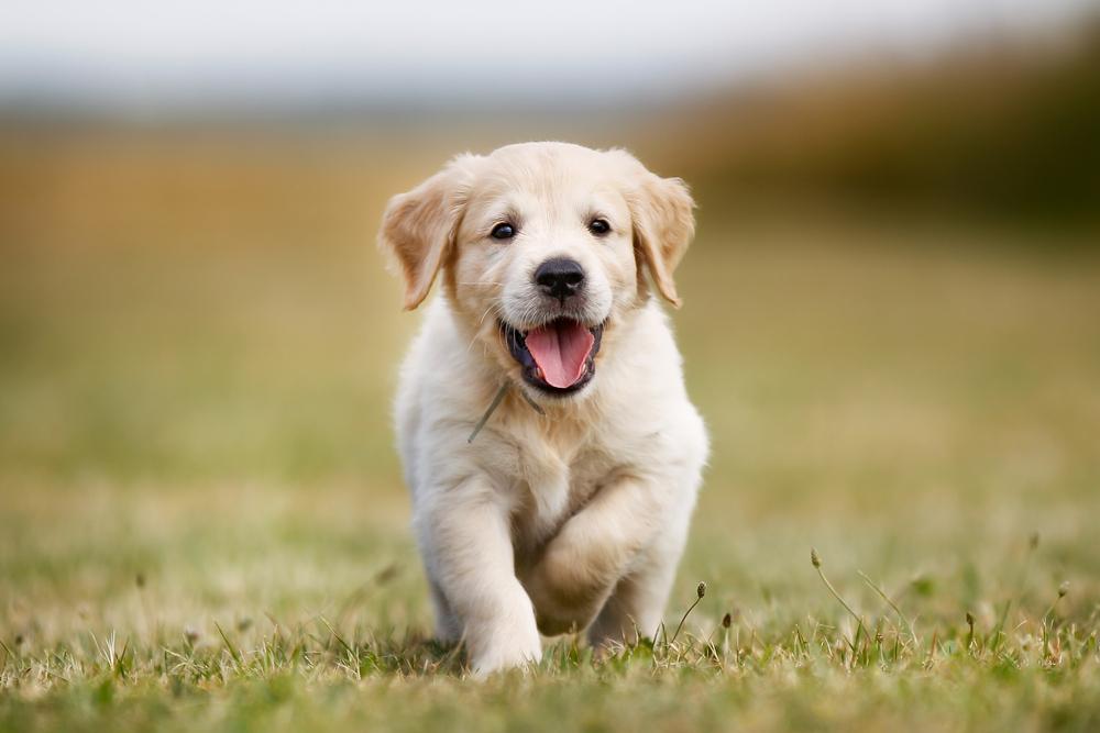 犬の社交性は生まれつき?