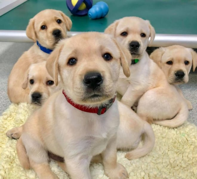 実験に参加した子犬たち
