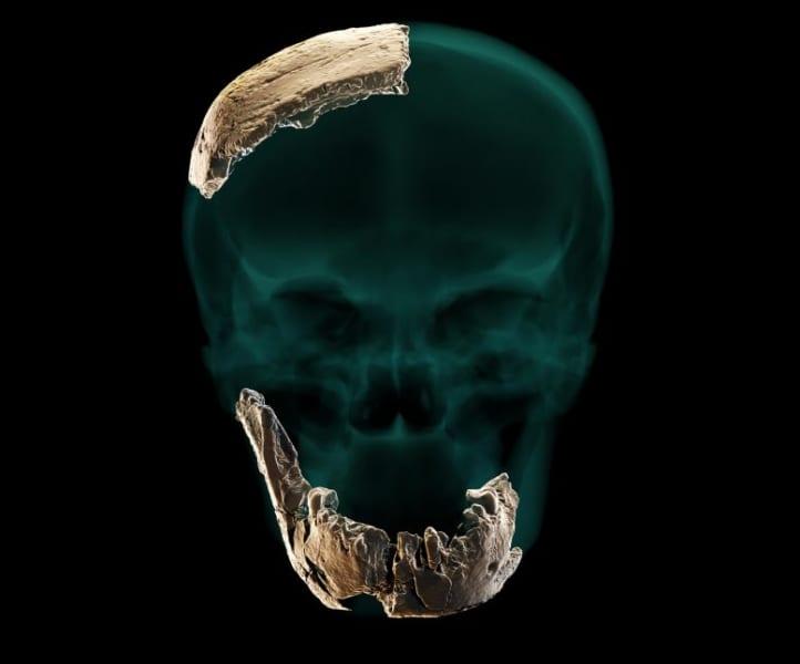 12万年前の化石から「未知の人類」が発見される