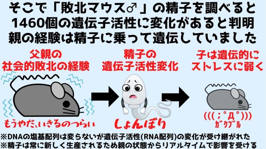 慢性社会的敗北ストレスは精子に乗ってRNA配列の違いという形で遺伝していた