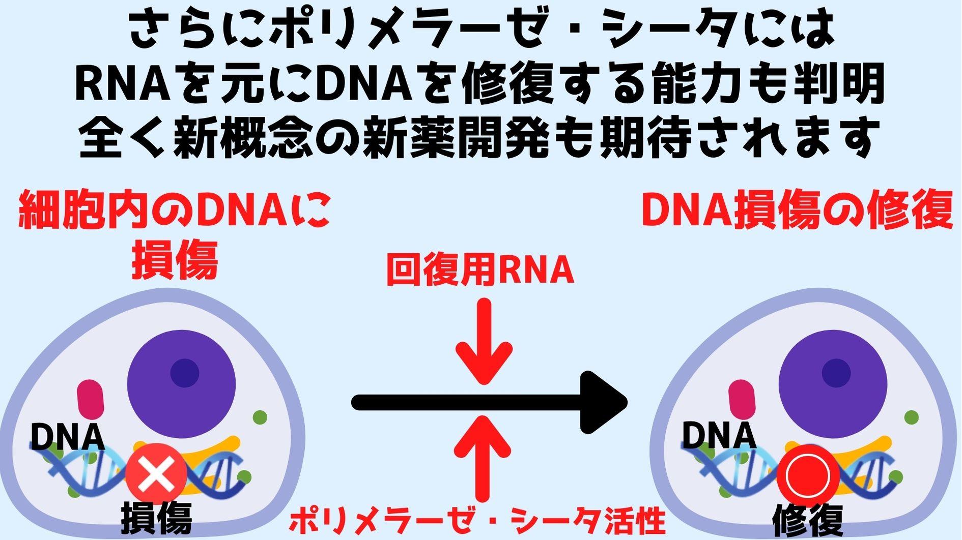 ポリメラーゼ・シータは人の細胞に含まれるDNAをRNA配列を元に修復できる。ただし核内ゲノムにかんしては未知である