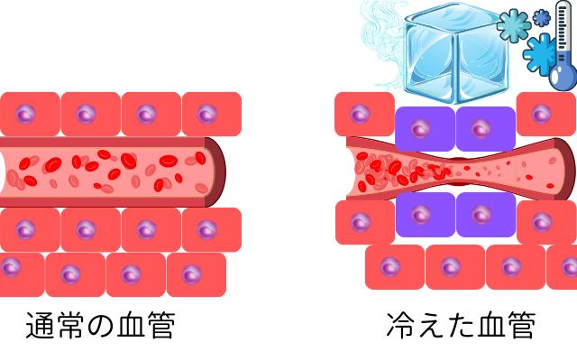 冷やされると血管が収縮して細胞に血液が送られなくなる