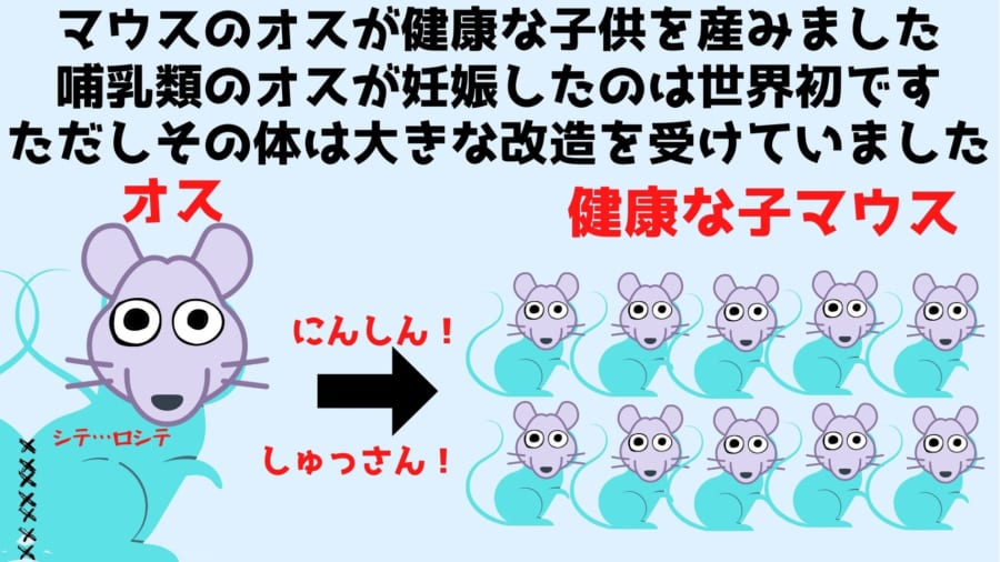 世界ではじめて哺乳類のオスによる妊娠出産が成功した