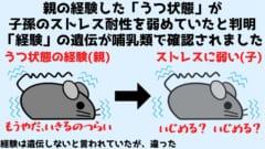 親マウスの「経験」が子マウスに遺伝すると判明