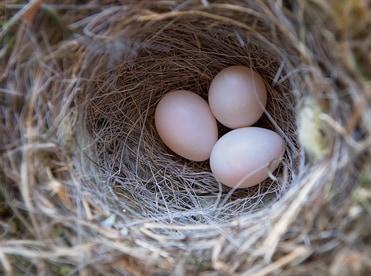 産まれた卵