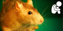 腸内細菌がいないとマウスが「ボッチ」になる不思議現象を解明!