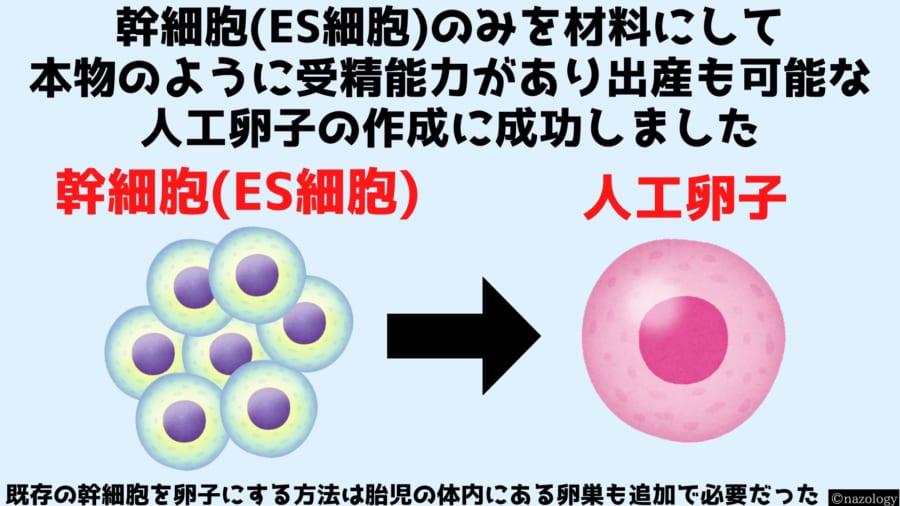 幹細胞の万能性を利用して受精能力のある卵子を作った