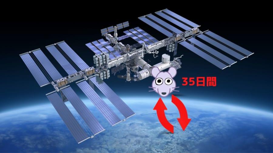 「宇宙生活の経験」が子供に遺伝すると判明!