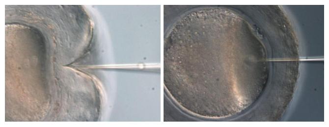 マイクロインジェクション法(左)、ピエゾマイクロインジェクション法(右)