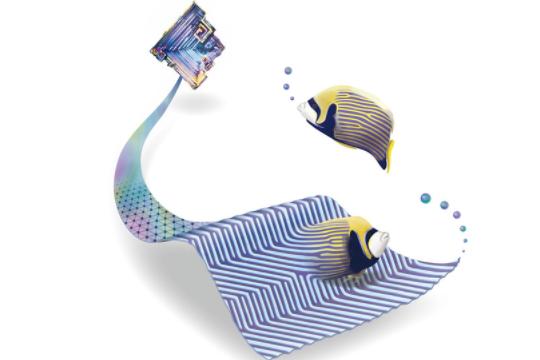 熱帯魚のシマシマ模様「チューリング・パターン」が原子の世界にも現れていた