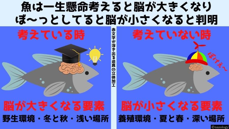 魚は一生懸命考える時に脳が大きくなり「ぼ~」としてると小さくなると判明!