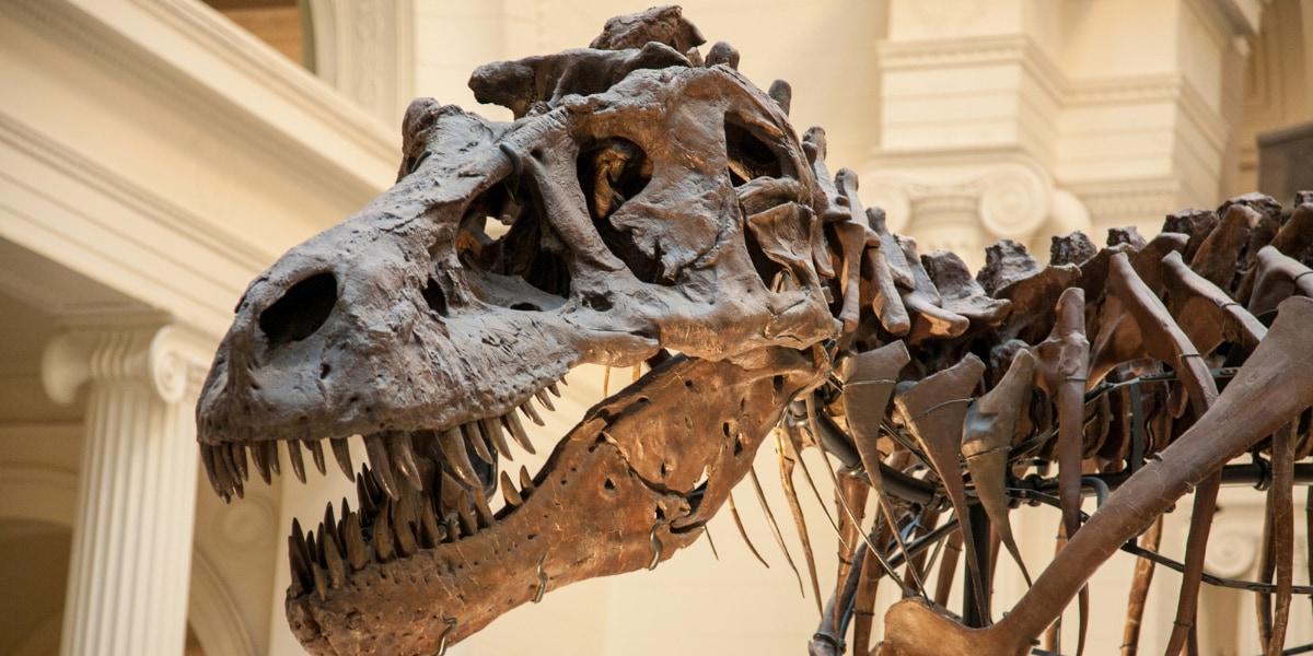 化石調査では、小惑星衝突前から恐竜の多様性は低下していたという