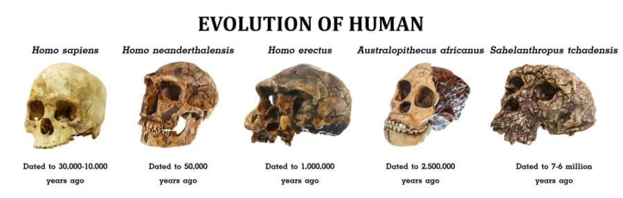 私たちのDNAの大部分は絶滅した祖先のもの