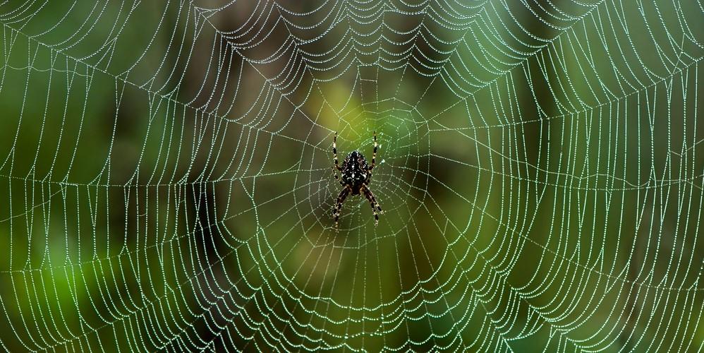 鋼より高い強度の人工クモ糸を開発