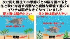 イワナ(レイクトラウト)は冷たい水が好きなため夏と春は沖の深い場所にいるが冬と秋には浅瀬に出てくる