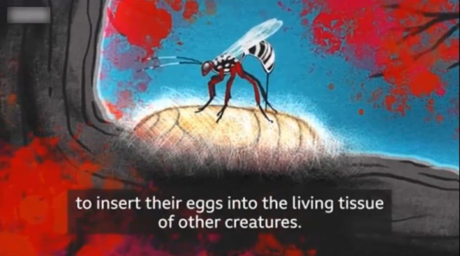 寄生蜂は卵管を宿主に刺して卵を産みつける