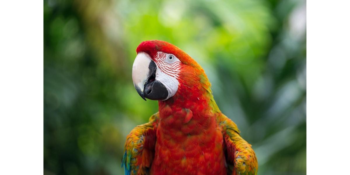 人間のマネをしてしゃべる不思議な鳥オウム