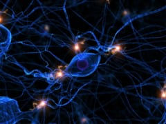 有効な鎮痛剤は痛みの神経伝達信号をブロックする