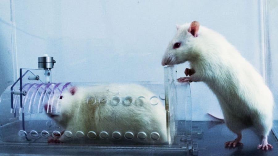 今回の実験で使われた「ラットを閉じ込めて苦しめる装置」の写真映像