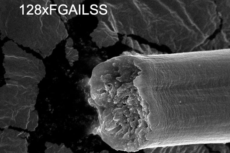 新しい人工クモ糸の顕微鏡画像