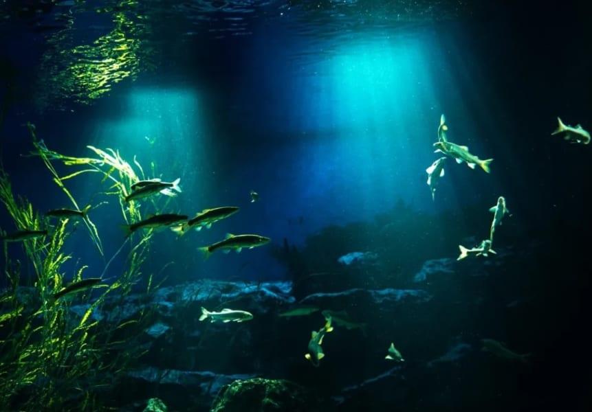 川の中の魚