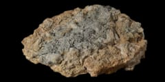 イギリス最大級の「化石の鉱脈」を発見!