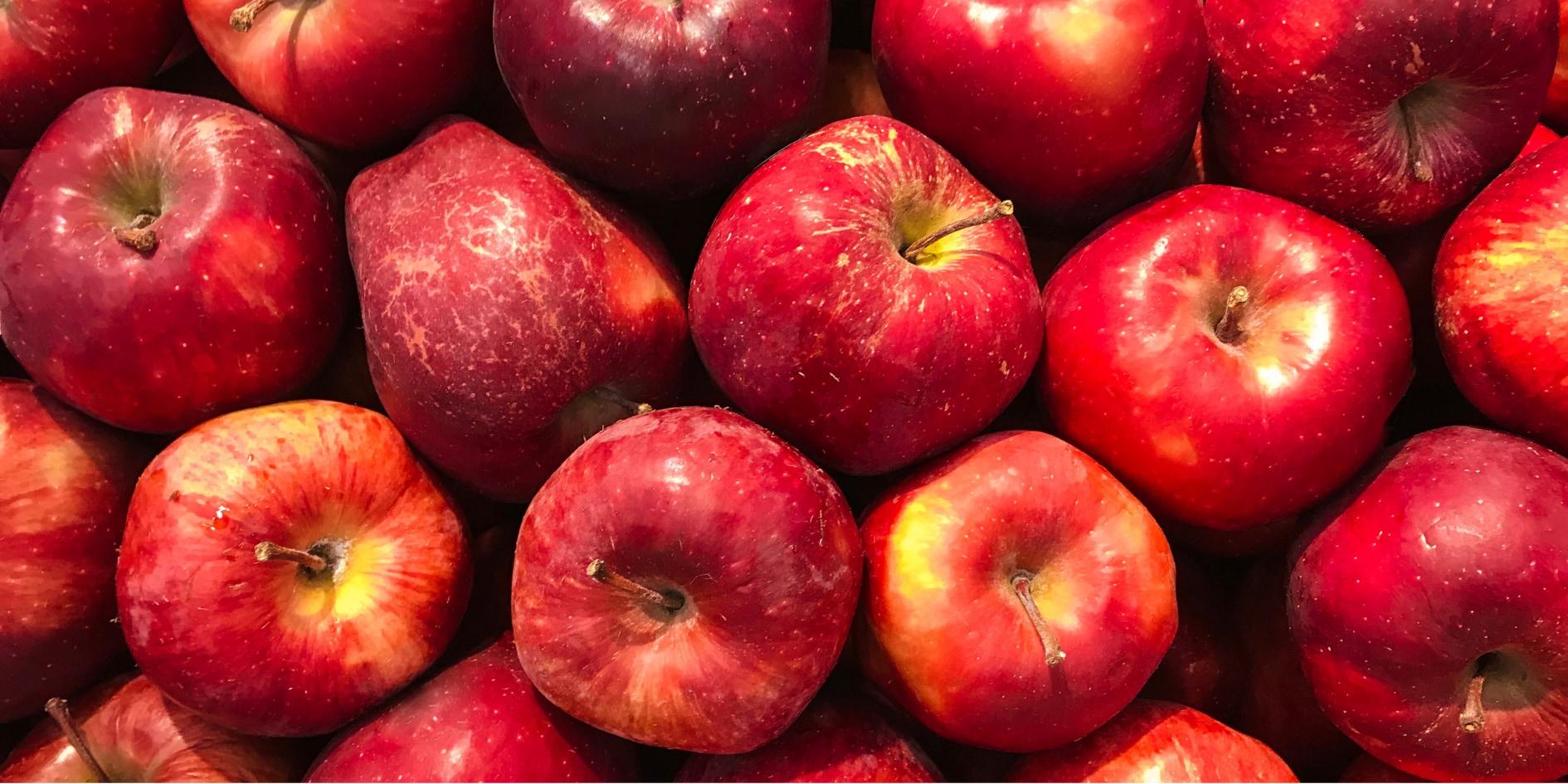 リンゴの蜜ができる仕組みが解明!