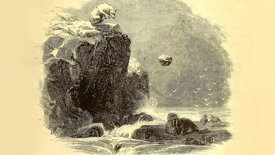 シロクマには「氷の塊でセイウチを撲殺する」習性があった